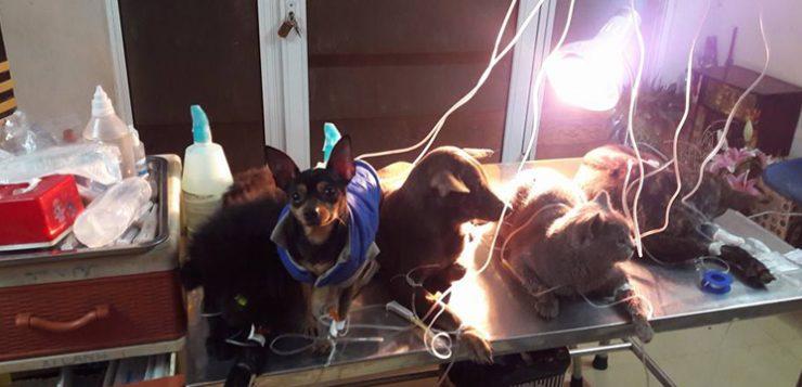 Thu nhập Khủng từ việc Chăm sóc thú cưng